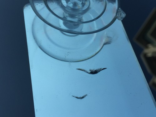 BMWのガラスの飛び石修理